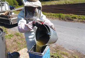 こうして美味しい蜂蜜がしぼれます。